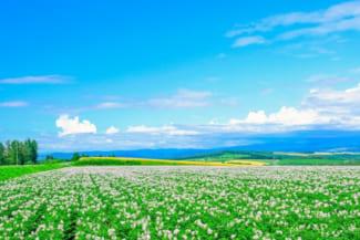 【北海道】道北のおすすめゴルフ場10選